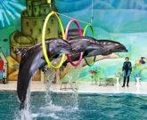 Игра Мy show dolphin