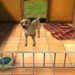 Игра Приют для животных