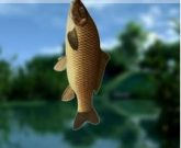 Игра Русская рыбалка 5