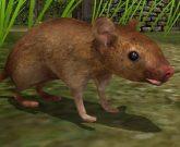 Игра Симулятор мыши: Семья